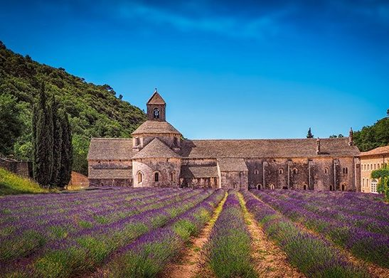 Lavender Fields | France | Europe